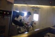 Panda on board